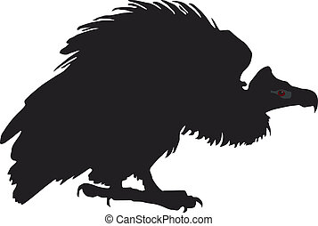 black vulture on a white background