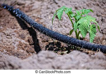 black water trickling hose for drip irrigation