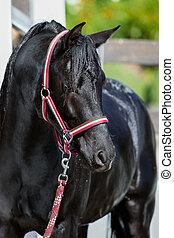 Black wet horse