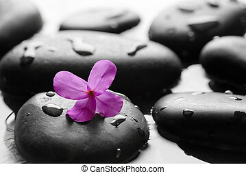 Black wet pebbles with flower