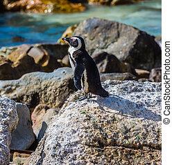 Black-white penguin on the beach