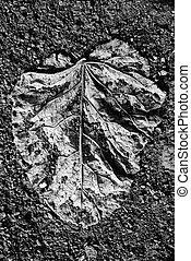 black- white photo of leaf print on the ground