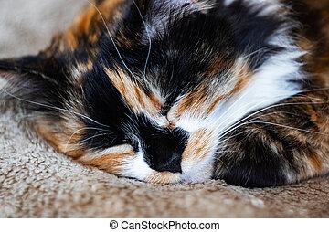 Black white red cat sleeping, close up portrait