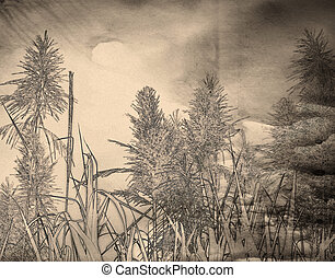 Black White Sugar Cane Background
