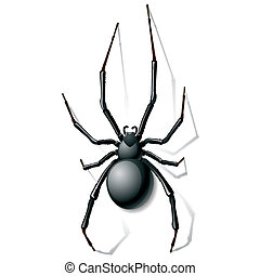Vector illustration of a black widow spider