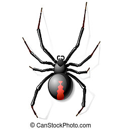 Black Widow spider vector illustration