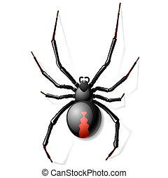 Black Widow spider vector illustration