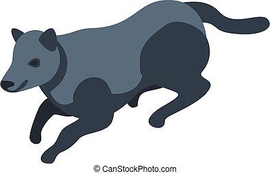 Black wild wolf icon, isometric style