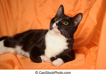 black with white cat on an orange background