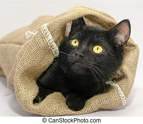 black with yellow eyes thrust its muzzle out of a sackcloth bag