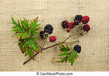Blackberries at a twig