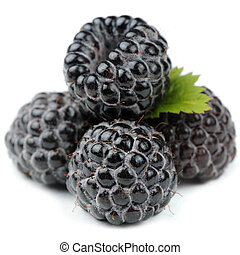 Blackberries with Green Leaf Close-Up Isolated on White Background