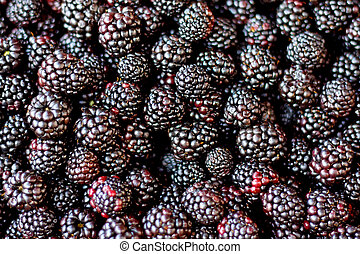Blackberry - Close up shot of organic blackberries fruits