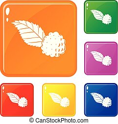 Blackberry icons set vector color