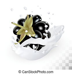 Blackberry in a milk splash on a transparent background. Vector icon.