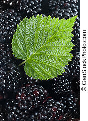blackberry with green leaf