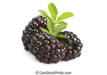 Blackberry with leaves on a white background