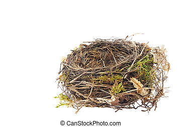 blackbird, 巢, 白色, 细节, 隔离