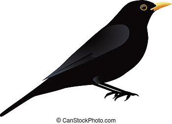 blackbird illustrations and stock art 742 blackbird illustration rh canstockphoto com Blackbird Cartoon Clip Art blackbird clipart black and white