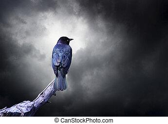 Blackbird with Dark Clouds