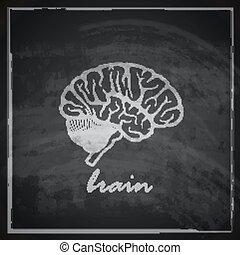 blackboard, bakgrund, illustration, hjärna, vektor, mänsklig, årgång