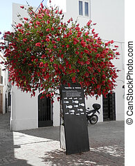 Blackboard menu in sunny Tarifa square, Andalusia