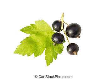 blackcurrant and leaf - blackcurrant and leaf isolated on...
