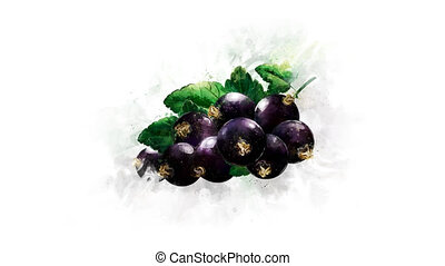 Blackcurrant Animation on the alpha channel - A beautiful...