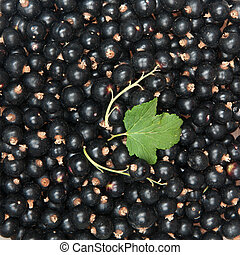 blackcurrant background