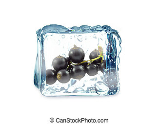 blackcurrant - Black currant in ice cube isolated on white