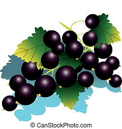 Blackcurrant. - Blackcurrant with green leaves. Vector...