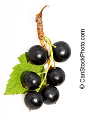 blackcurrant - Brush with fresh black currant on a light...