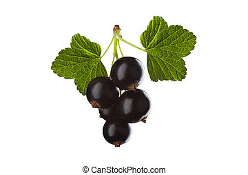 blackcurrant isolated on white background with two green...