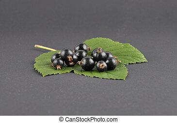 Blackcurrant on black background