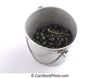 Blackcurrant with tin bucket on white background