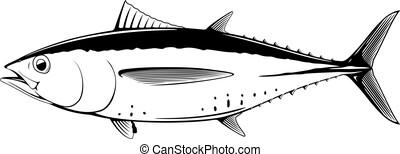 blackfin, 白い魚, マグロ, 黒