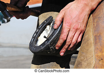Blacksmith, or equine farrier, nails a horse shoe to a horse...