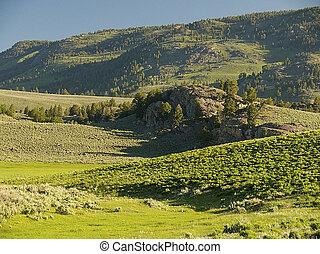 Blacktail Deer Plateau - Yellowstone National Park needs no ...