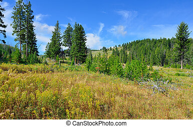 Blacktail Plateau in Yellowstone National Park, Wyoming in ...