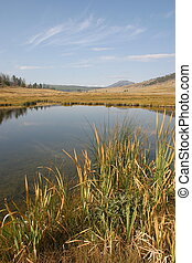 Blacktail Ponds at Yellowstone National Park