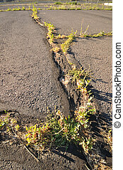Blacktop lot with grass growing from cracks