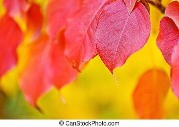 blad, abstract, achtergrond, herfst