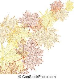 blad, bacground, macro, herfst, vector, maple.