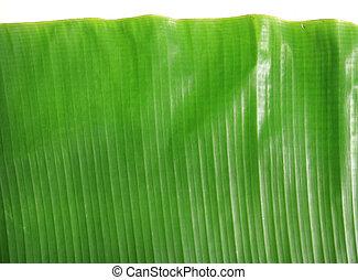 blad, banaan, achtergrond