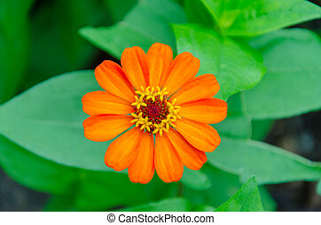 blad, bloem, groene achtergrond
