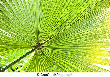blad, boompje, op, groene, afsluiten, palm