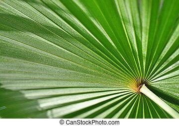 blad, close-up, palm, groene achtergrond