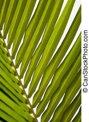 blad, close-up, palm, groene