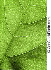 blad, detail