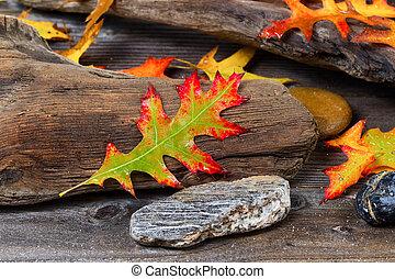 blad, drijfhout, oud, eik, herfst